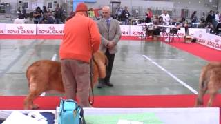 29 avril 2012 / exposition San Remo  / Open Class