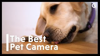 What Is The Best Pet Camera For Your Money?