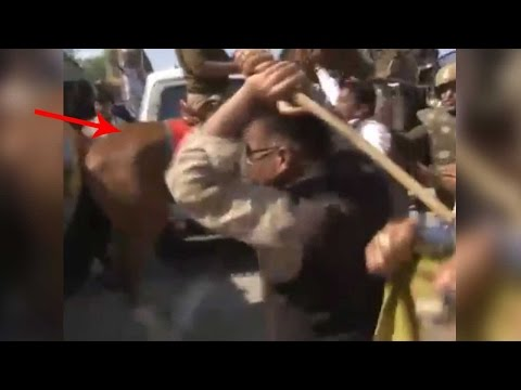 BJP MLA beats up horse during protest breaking its leg, Watch video