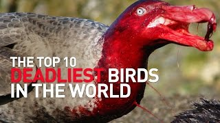 Top 10 Deadliest Birds in the World