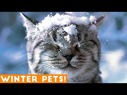 Funniest Winter Animal Video Compilation 2018 Funny Pet Videos