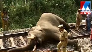 Wild elephant killed in speeding train in Palakkad  | Manorama News