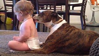 Kluge Hunde Lehren Babys Dinge Zusammenstellung 2014 [HD VIDEO]