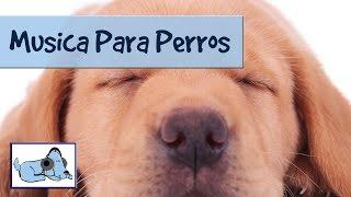 Música Diseñada Para Relajarse Perros. Música Tranquilizante Para los Animales Domésticos 🐶 RMD08