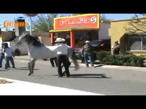 caballo bailando moro de cumpas notidiario