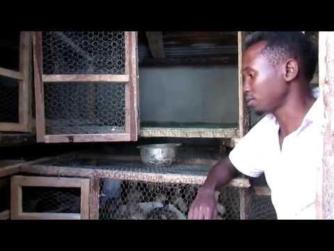 Xxx Mp4 Mfahamu Victor Engineer Aliyeamua Kuacha Kazi Na Kuanza Kufuga Kuku Na Samaki Kabellerge Show 3gp Sex
