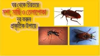 ঘর থেকে চিরতরে মশা, মাছি ও তেলাপোকা দূর করুন প্রাকৃতিক উপায়ে !! health tips in bangla 2017
