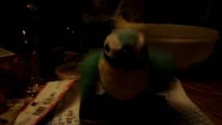 a dumb ass bird thats funnyer than hell