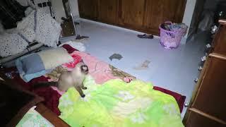 كواليس فيديو غرفة النوم