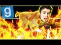 Download Video Download PIECZONY PIESEŁ Z ROŻNA | Garry's mod [#875] - Hide & Seek [#80] #BLADII 3GP MP4 FLV