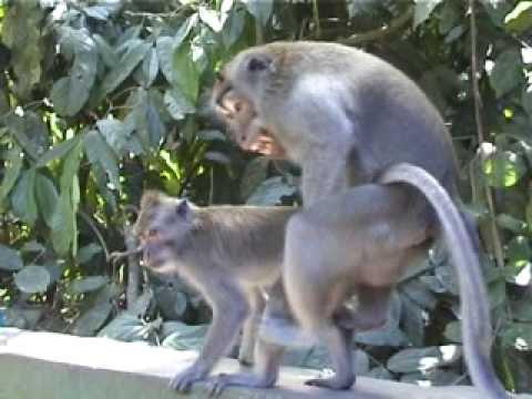 Monkey style - animal love