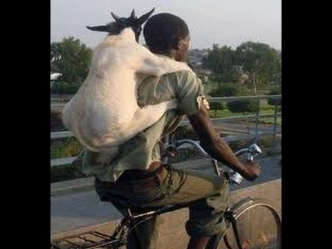 Guy on a bike with goat on his back - 3D