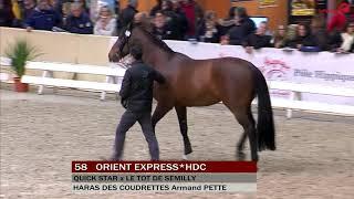 Orient Express - Salon Etalons Saint Lô - 02/2018