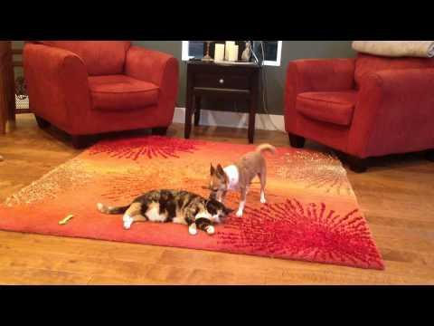 Xxx Mp4 Cute Girl Dog Finds Same Sex Love With Cute Girl Cat 3gp Sex