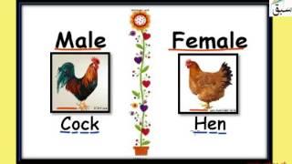 Animals Male Female
