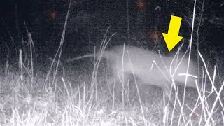 5 Mysterious Creatures You Wouldn't Believe if They Weren't Recorded!