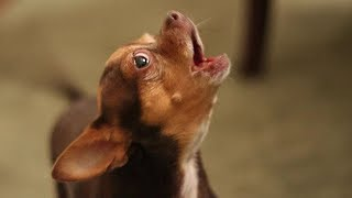 Hilarious Dogs Making Funny Noises Compilation (2017)