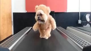 N°20 chien sportif elle nous montre ce qu
