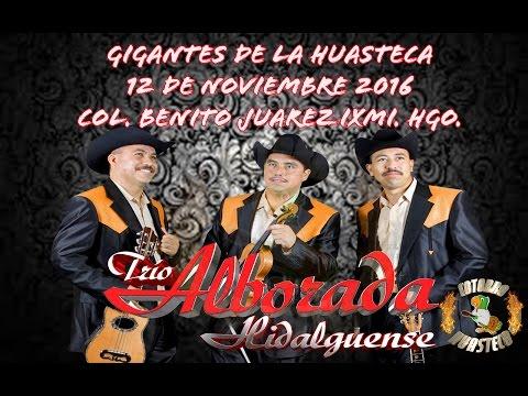 GIGANTES DE LA HUASTECA COL. BENITO JUAREZ IXMI. TRIO ALBORADA HIDALGUENSE