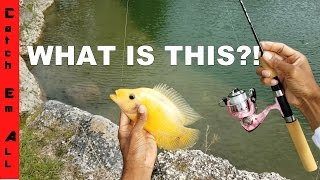 RIVER CHICKENS! Catching the Prettiest Fish in Freshwater!