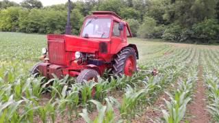 Mtz 80 kukorica ekézése