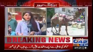 Children enjoying with their sacrificial animals ahead of Eid | City 42