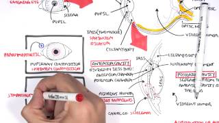 Anatomy - Eye Overview