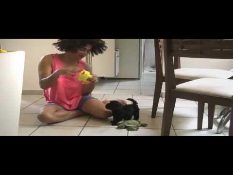 Grelo Rose a doméstica das Bicha Versão de Halo Beyoncé OFICIAL