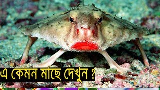 Most Unknown ANIMALS  || IN BANGLA  || Top 5 Amazing animal in the World