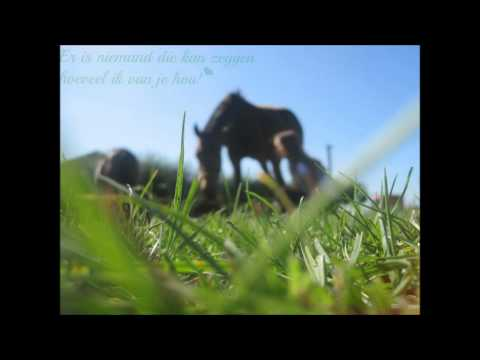 Anais & Horses .. xxxx