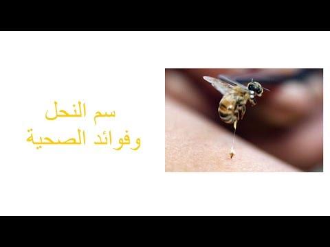 سم النحل وفوائده الصحية
