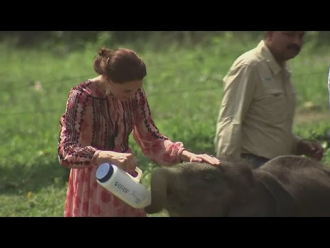 Xxx Mp4 Kate And William Feed Baby Elephants And Rhinos 3gp Sex