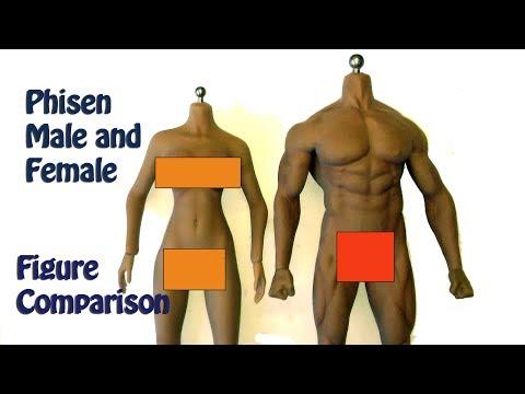 Phicen Male and Female Figure Compairson