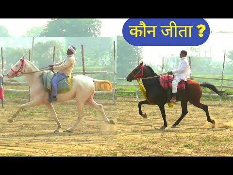 डोमन मुखिया HORSE AND NAND PAHALWAN HORSE PRACTISE ON GROUND