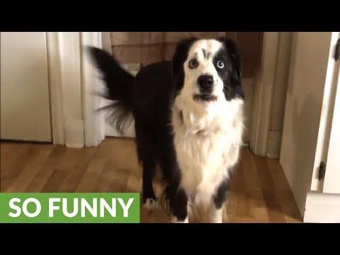 Xxx Mp4 Dog On Diet Throws Tantrum When Denied Cookies 3gp Sex