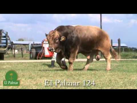 El Palmar 124
