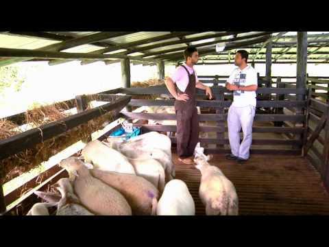 Escuela de campo Alimentación y nutrición en ovinos 15 de agosto