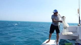 الصيد بألطراحة