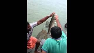 salmon fish(3.5 kg)caught at munambam by santhosh-video 2
