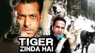 Wolves Get Ready To Fight With Salman In Tiger Zinda Hai