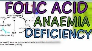 Folic Acid - Functions, Tetrahydrofolate, Megaloblastic Anaemia and Folic Acid Deficiency