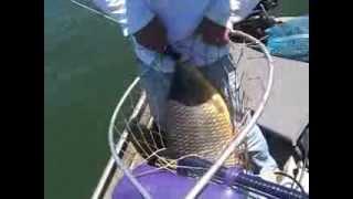 Pesca de Piauçu de 10,5kg