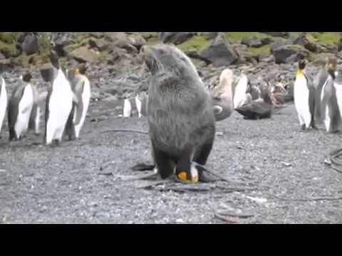 SEAL FUCKS PENGUIN REPEATEDLY
