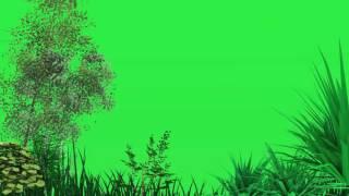 Green screen pohon