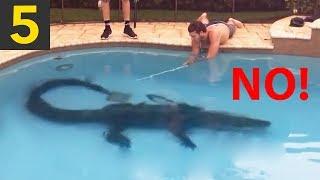 Top 5 Alligators Found in Swimming Pools!