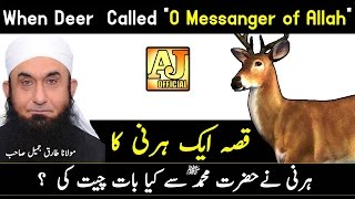 [Story] When The Deer Talking to Prophet Muhammad ﷺ | Maulana Tariq Jameel Bayan 2017
