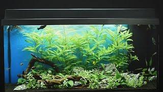 Juwel Aquarium Primo 110 LED Einrichtungsbeispiel / Tutorial