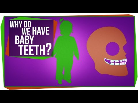 Why Do We Have Baby Teeth