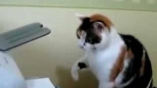 funny cat fixed computer