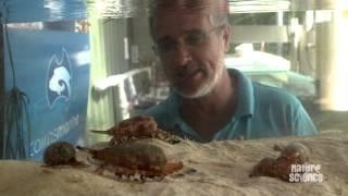 How killer cone snails kill